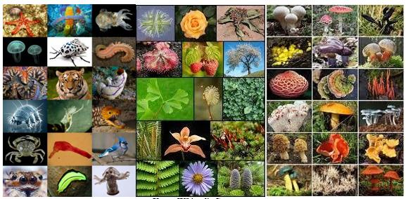 Biodiversiteetti