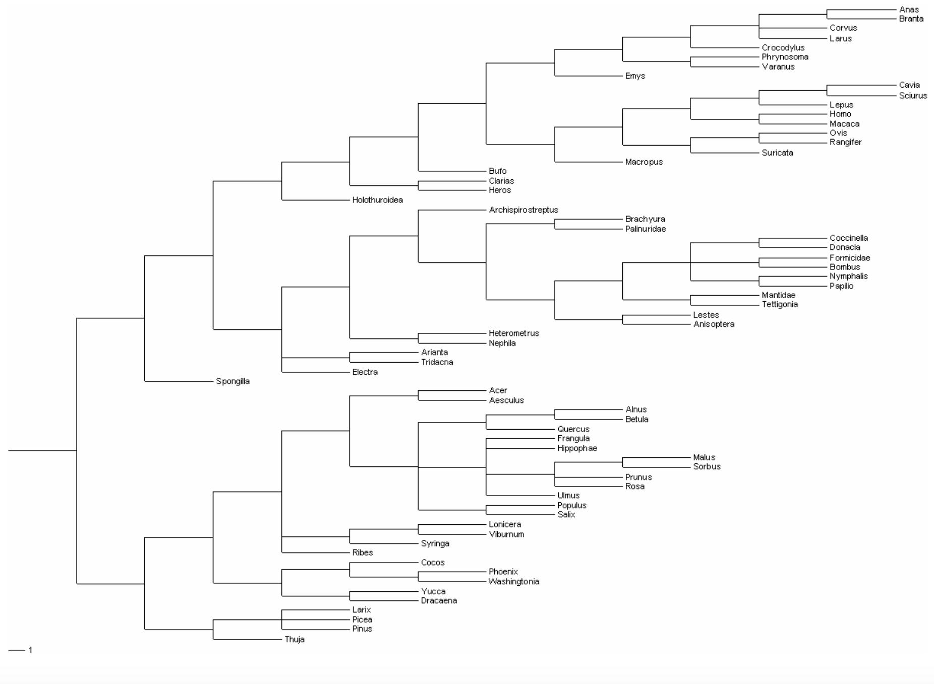 Esimerkkieliöiden sukupuu (Sukupuu A).