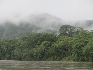 Bolivian rainforest