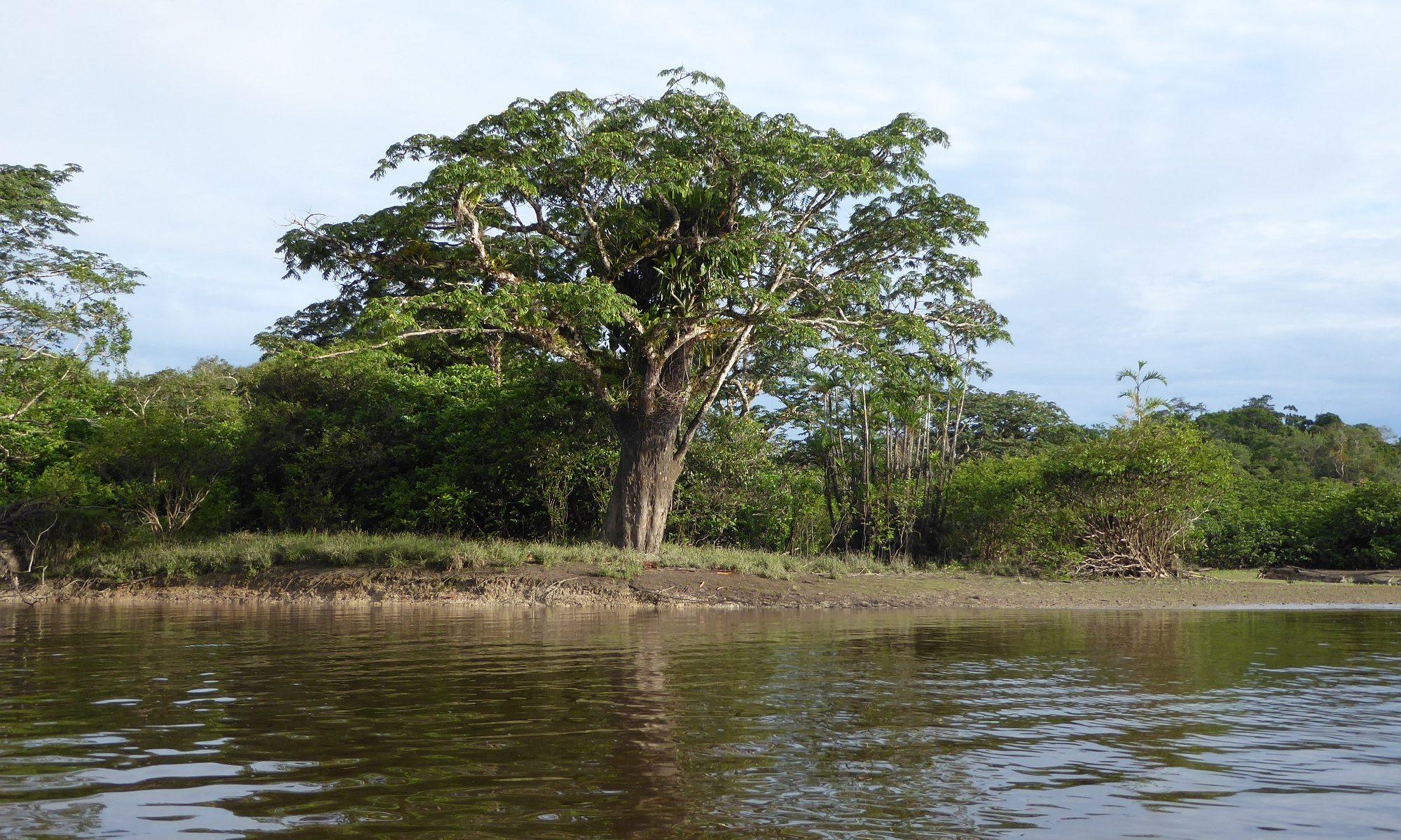 Eco-cultural pluralism in Ecuadorian Amazonia