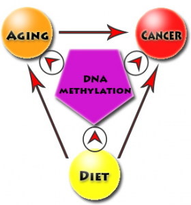 The interplay between diet, aging, epigenetics, and cancer