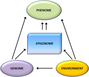 Epigenome has an important role along with genotype and environment in determining phenotype