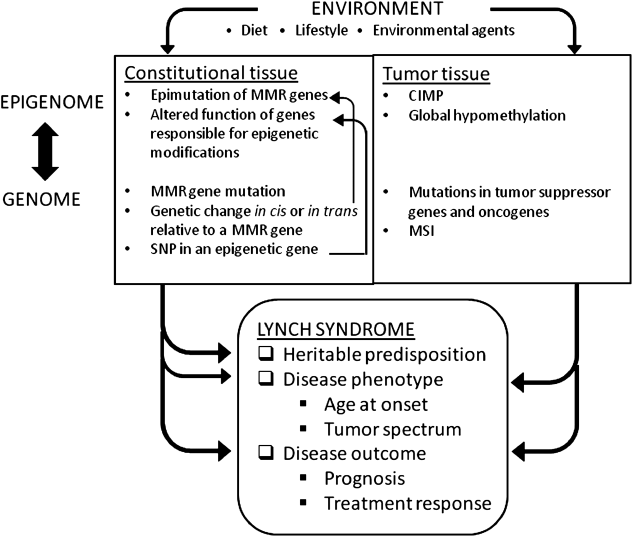 Fig.1 Interplay between epigenetic, genetic, and environmental factors as contributors to Lynch syndrome predisposition as well as phenotype of the disease (Peltomäki, Clin Genet 85: 403 - 412, 2014).