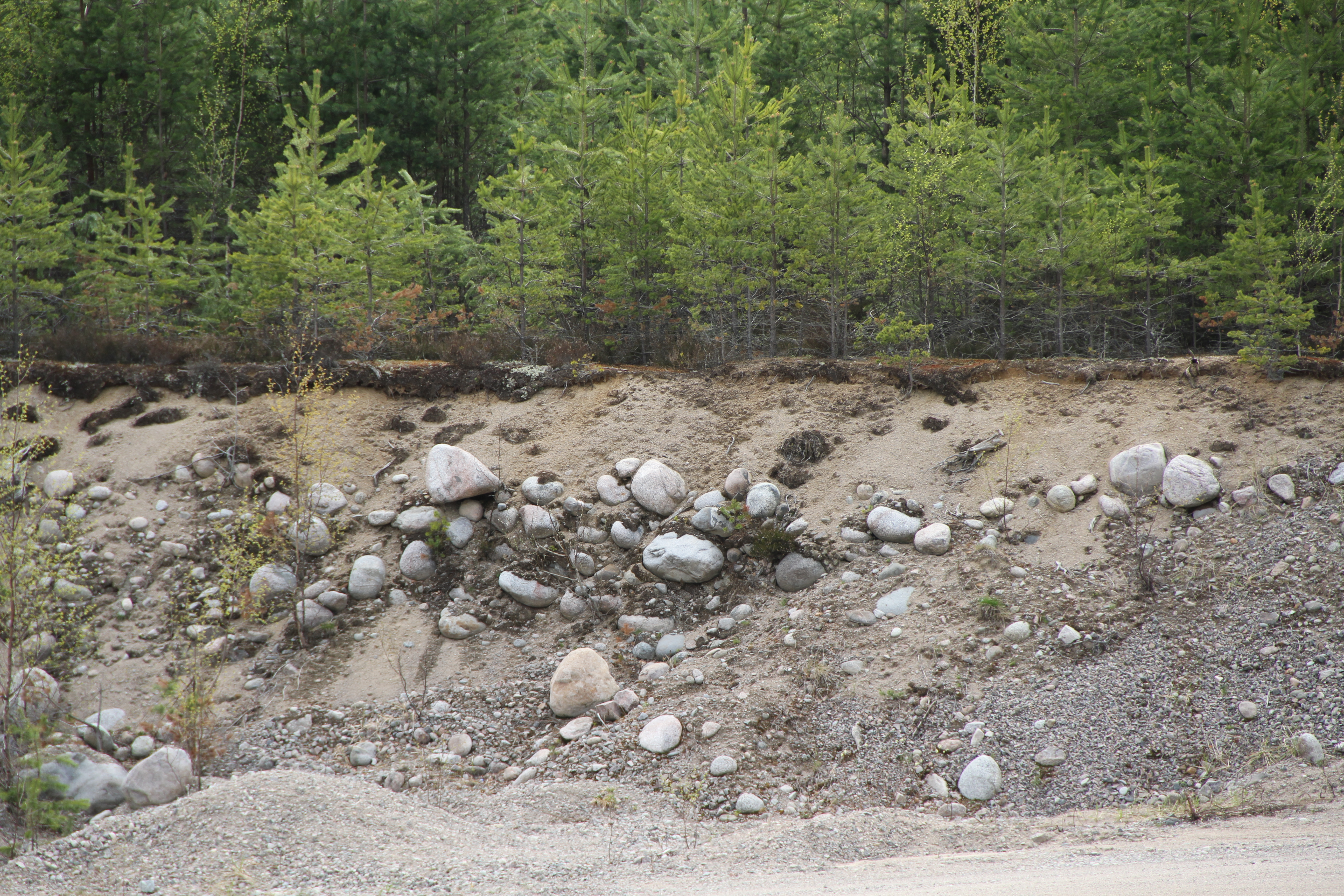What is the soil in the forest steppe Type, features 24