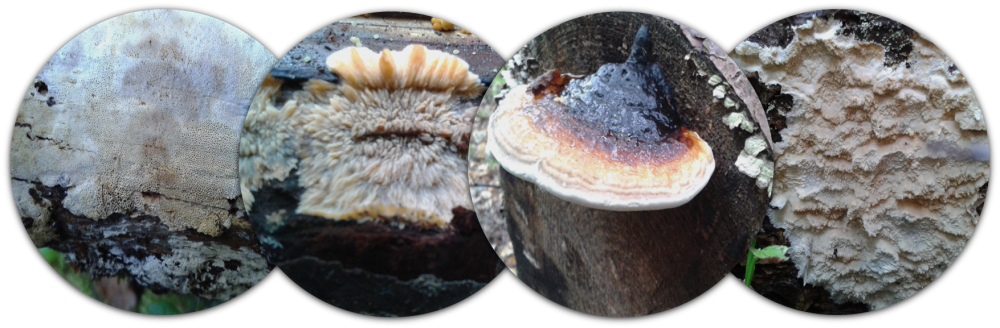 Fungal omics and eco-physiology on wood – FUNGCO group