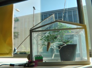Side view of the system and mini greenhouse.