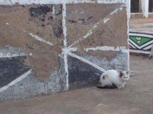 Kissanpentu ndebeleseinän väreissä