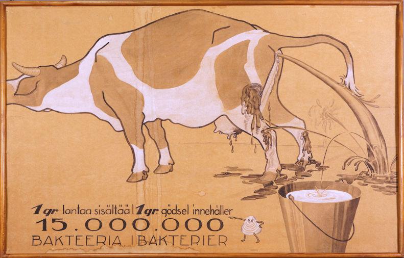 Piirroskuva ulostavasta tai virtsaavasta lehmästä. Lehmän turpa jää hieman kuvan vasemman reunan ulkopuolelle. Ulostetta roiskuu lehmän jaloille, maitoämpäriin ja seinille. Kuvassa on teksti: 1 g lantaa sisältää 15.000.000 bakteeria ja ruotsiksi 1 gr gödsel innehåller 15.000.000 bakterier.
