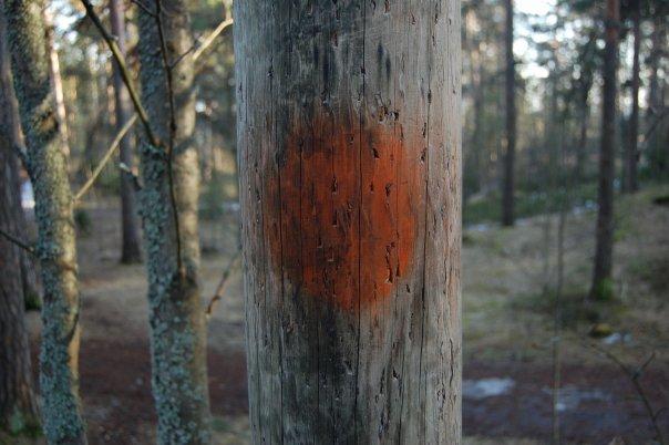 Päin mäntyä? Metsätalous ja ilmastonmuutos