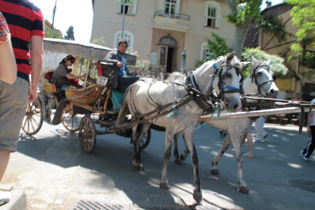 Det var synd om hästarna som jobbade i över +30 graders värme.