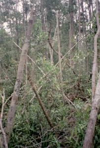 Poorly planned timber felling can cause severe damage in forest (photo J. Jauhiainen)