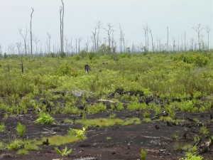 Abandoned area after 2 years since the last fire in Ex-MRP Block-C in Central Kalimantan (Photo: J. Jauhainen, 2004) .