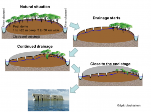Story of permanently drained tropical peatland