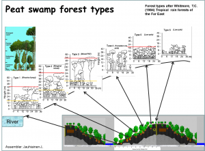 Outline of peat swamp forest types after Whitmore (1984).