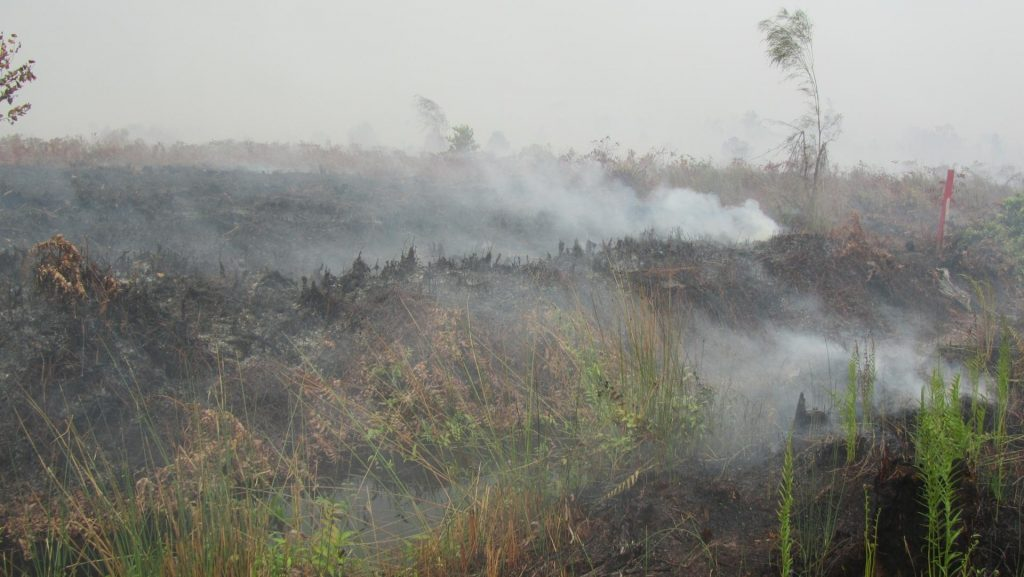 Kalimantan burning 2-2014_web_small