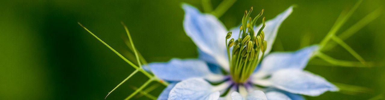 Lumoudu kasveista teemapäivät/Fascination of Plants Days