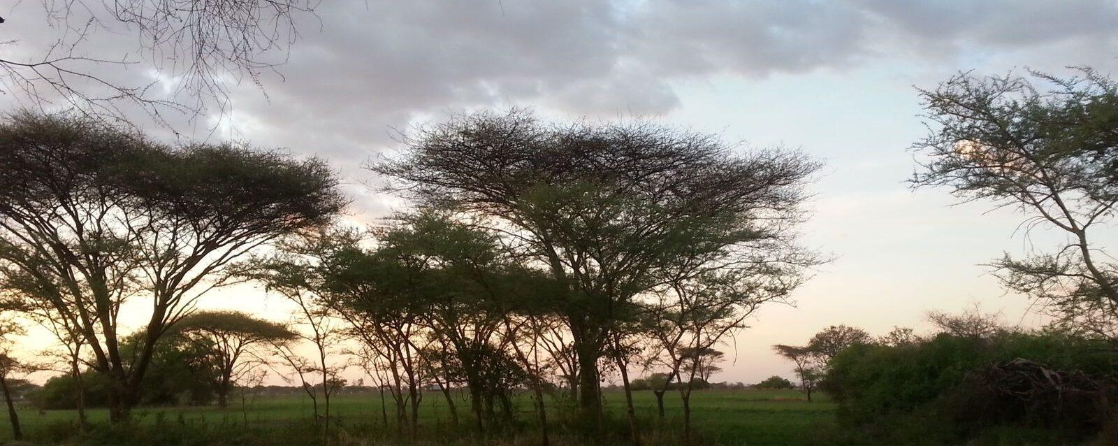 The Mara Project