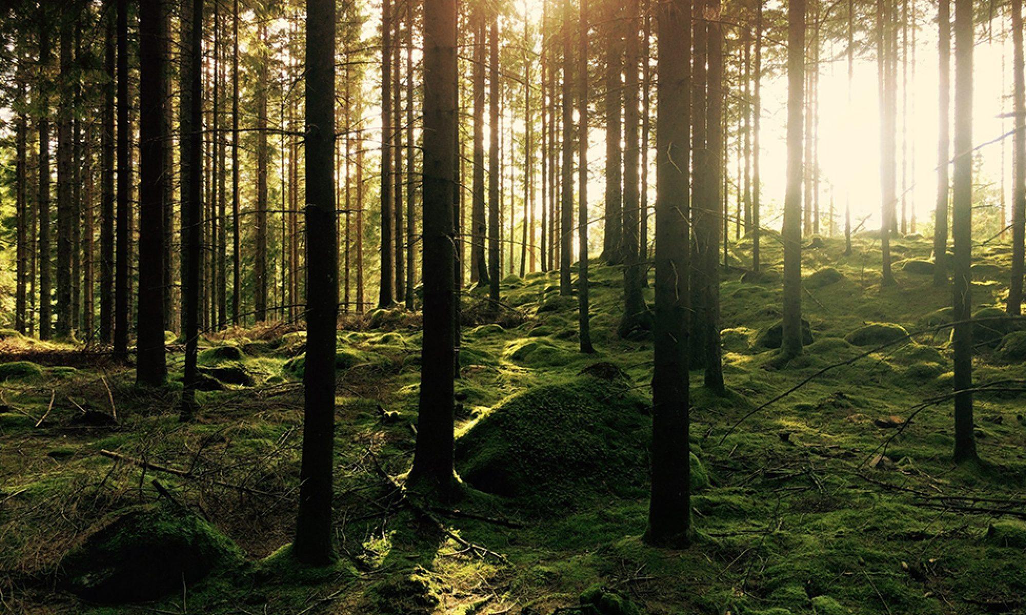 Metsävarojen hallinta ja geoinformatiikka
