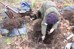 """Koekuoppia tehtiin Kylänlahden ympäristössä keskiaikaisen asutuksen paikantamiseksi. Kuvassa myös tutkimusryhmää koko päivän seurannut """"työnjohtaja"""" Lilli."""