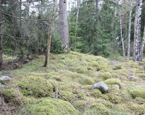 Muinaisrantakivikon yläpuolelle nouseva kumpu on mahdollinen pronssikautinen hautaröykkiö.
