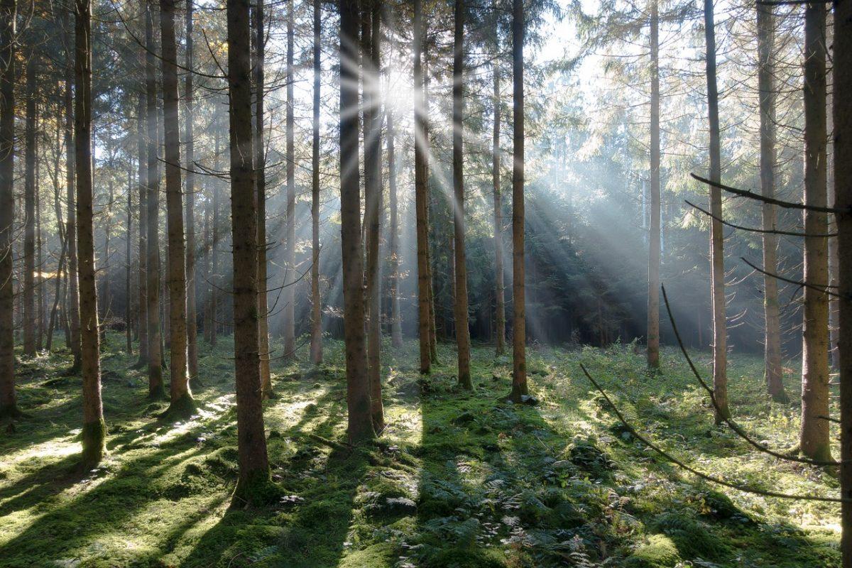 Hakametsän menninkäiset metsässä!