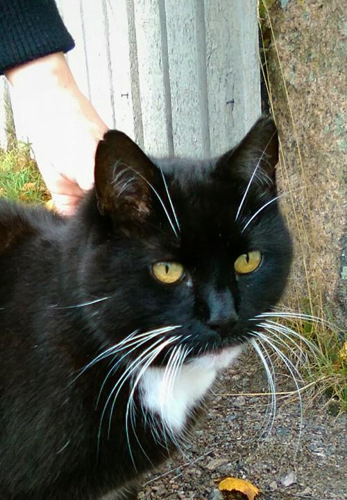 Ihastuttava kissarouva, joka ei valitettavasti antanut nimeään tutkimuskäyttöön.