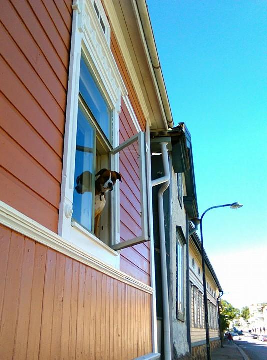 Seuraava tutkimuskohde: koirien nimet. Mahdollinen informantti ikkunassa.
