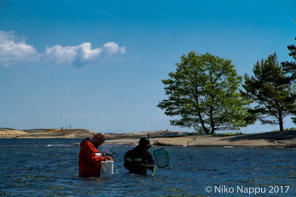 Catching gsand gobies in shallow water.