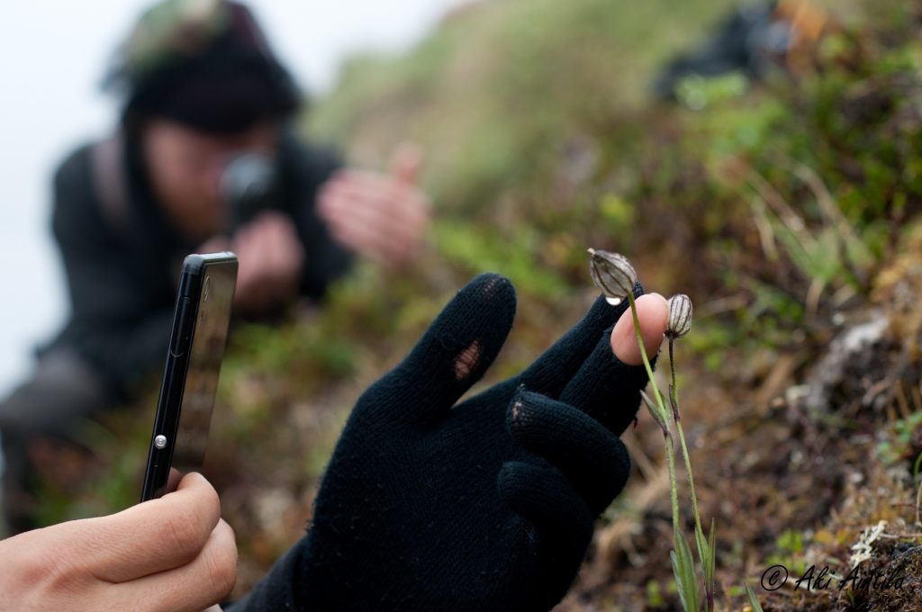 The hotspot of Finnish fell flora is located in Kilpisjärvi. Students observing Silene wahlbergia in Malla strict nature reserve (photo: Aki Aintila).