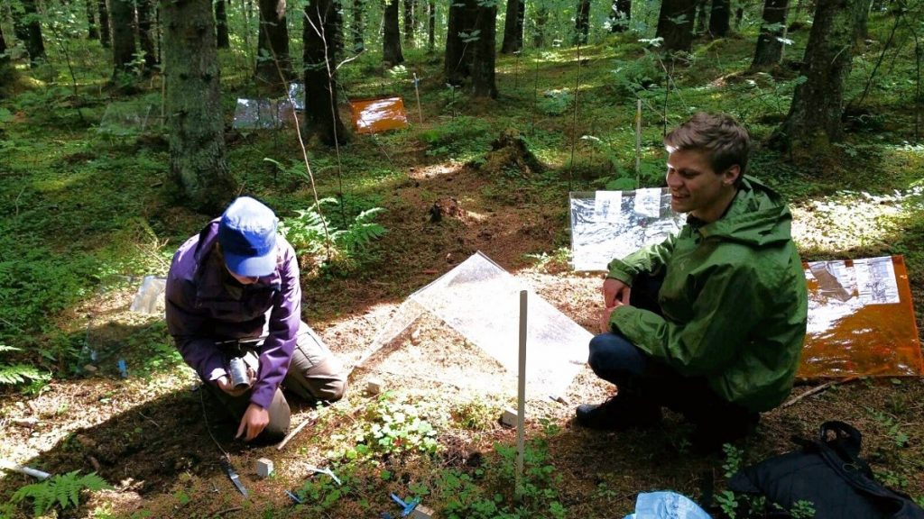 The Canopy Spectral Ecology and Ecophysiology group at the University of Helsinki doing field work (photo: Marta Pieristé).