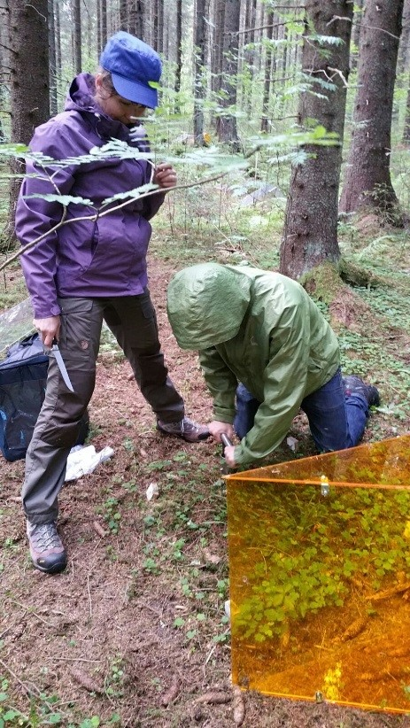 Right: Dr Estelle Forey and PhD student Craig Brelsford from CanSEE group taking soil core samples from the plots. These will then be analysed by for the content of the soil, and the composition of mircofauna inside (photo: Marta Pieristé).