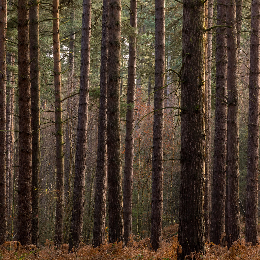 """""""Into the forest"""" by azima_97 is licensed under CC BY-NC-SA 2.0"""