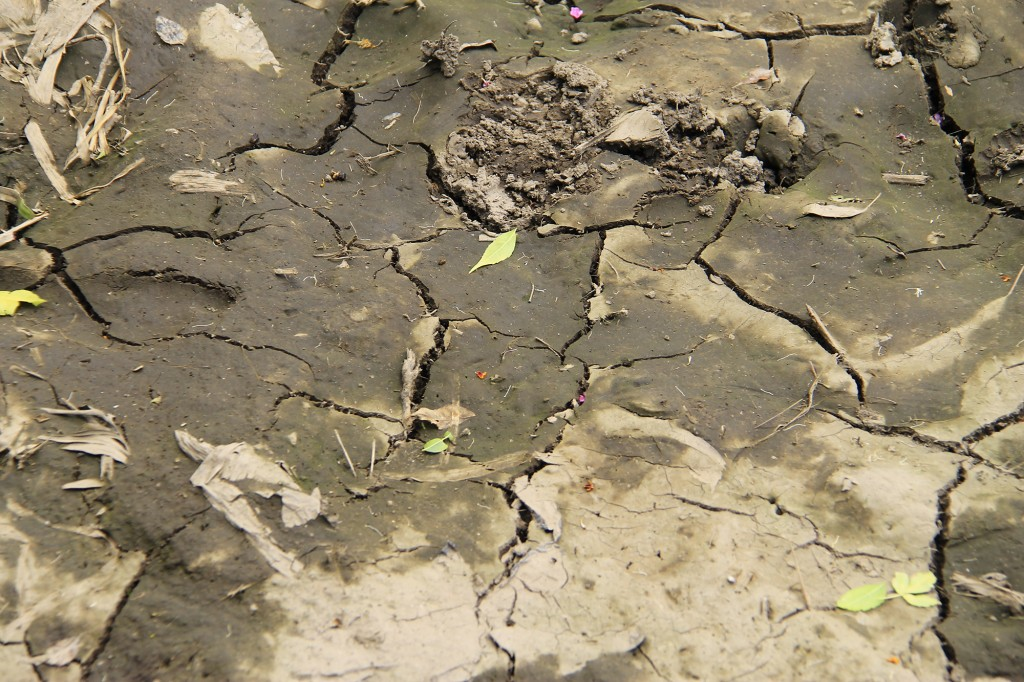 Ethiopia is experiencing severe drought this year. The soil is dry and there is not enough food for the animals.
