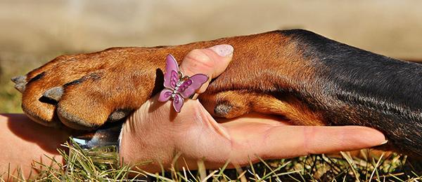 Studia Generalia 27.10.: Koiria ja ihmisiä