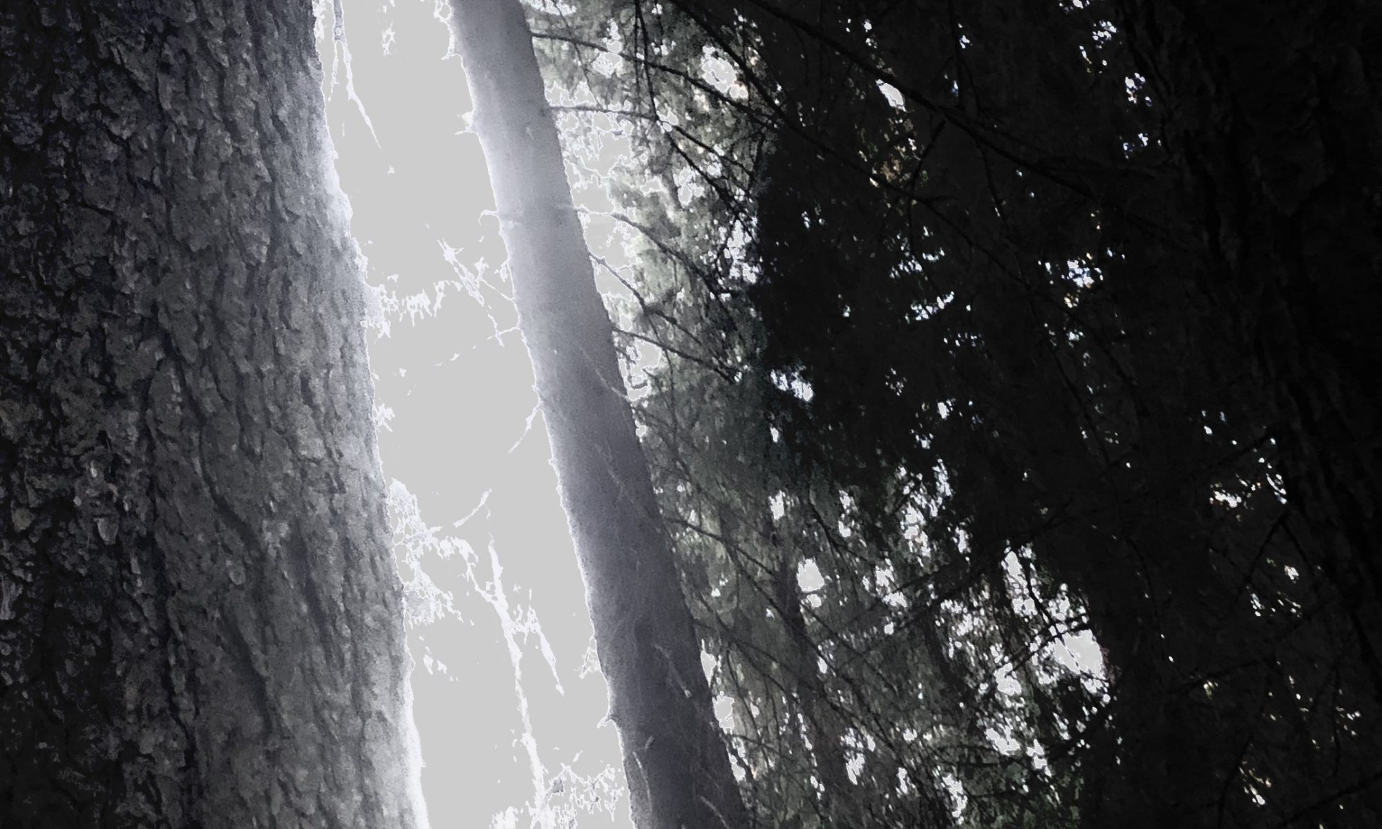 image of trees with filters