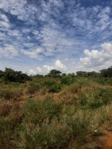 Savannah landscape in Tsavo park