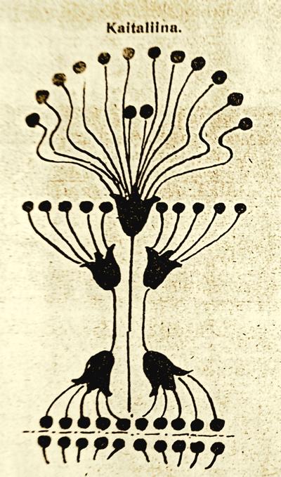 kaitaliina-1911.jpg