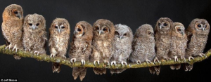 Owls by Jeff Moore